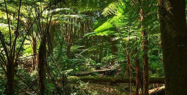Foresta Australia